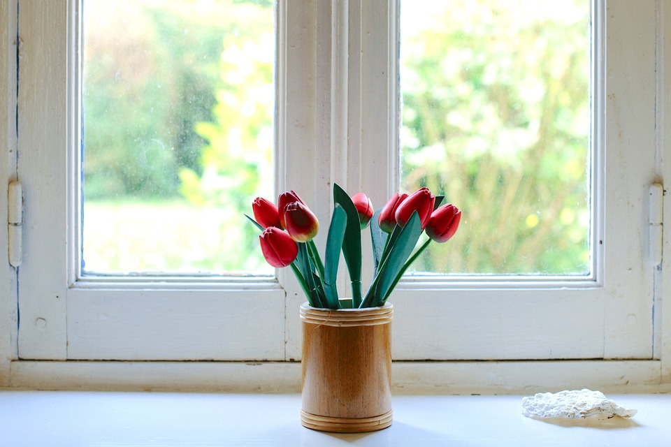 Indoor flower on the windowsill