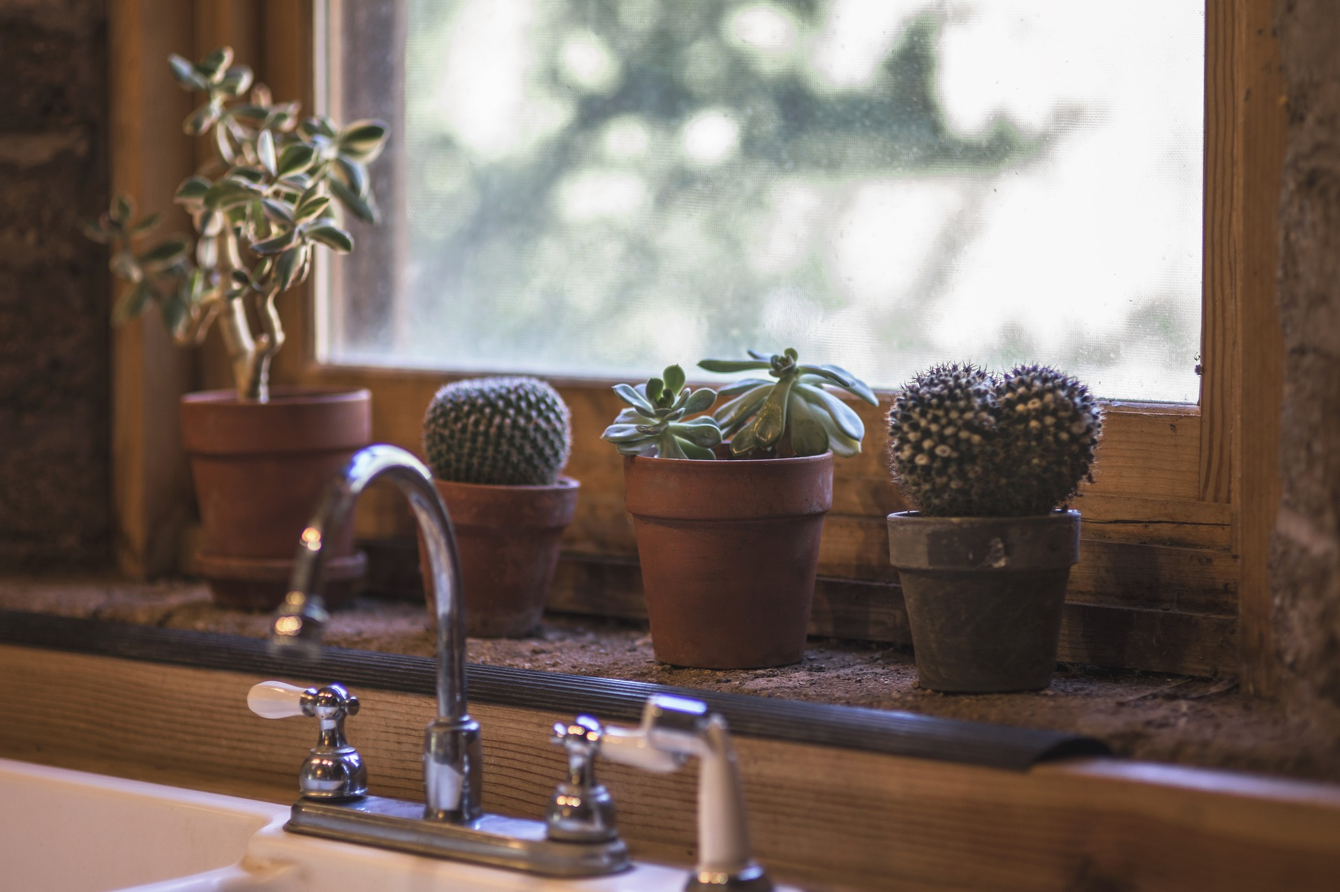At the back of the best kitchen faucet are the cactus indoor plants